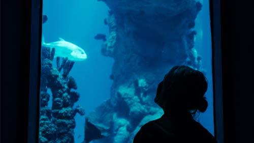 The Deep Aquarium Hull